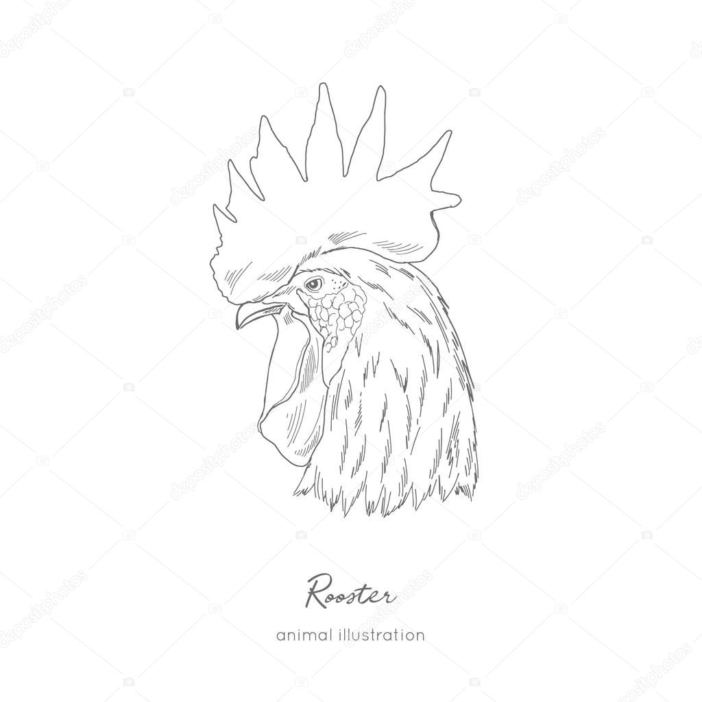 Side view Vector portrait illustration of rooster bird