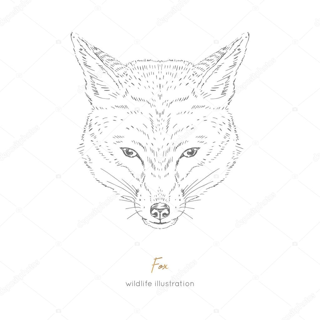 Vector symmetrical portrait illustration of fox forest animal