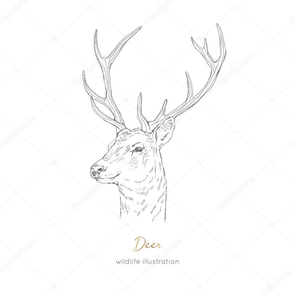 Vector profile portrait illustration of deer forest animal