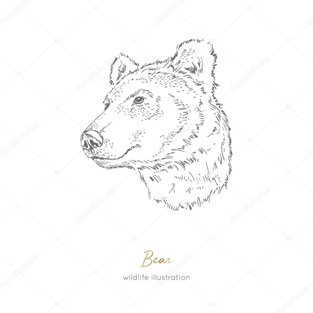 Vector profile portrait illustration of brown bear forest animal