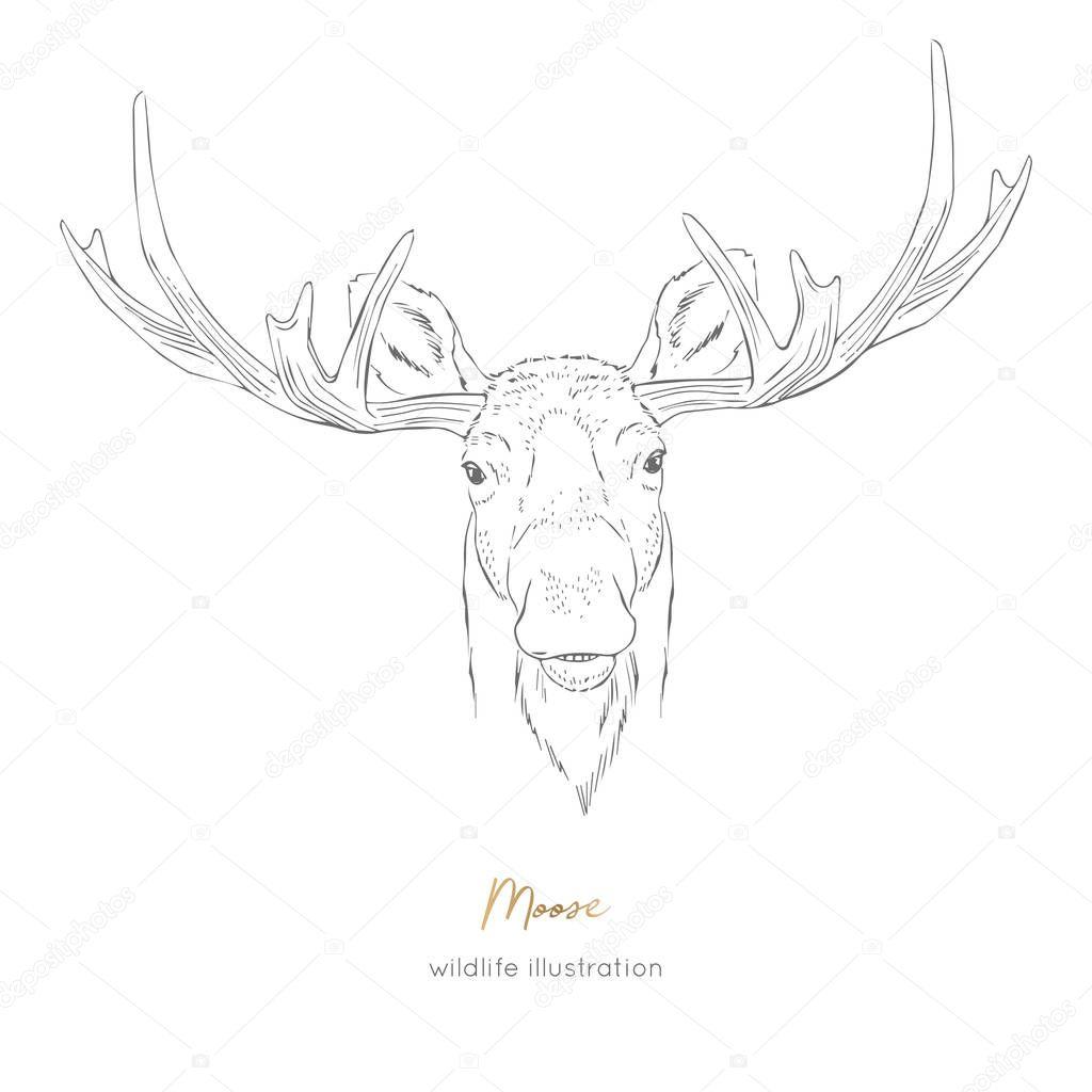 Vector symmetrical portrait illustration of moose forest animal