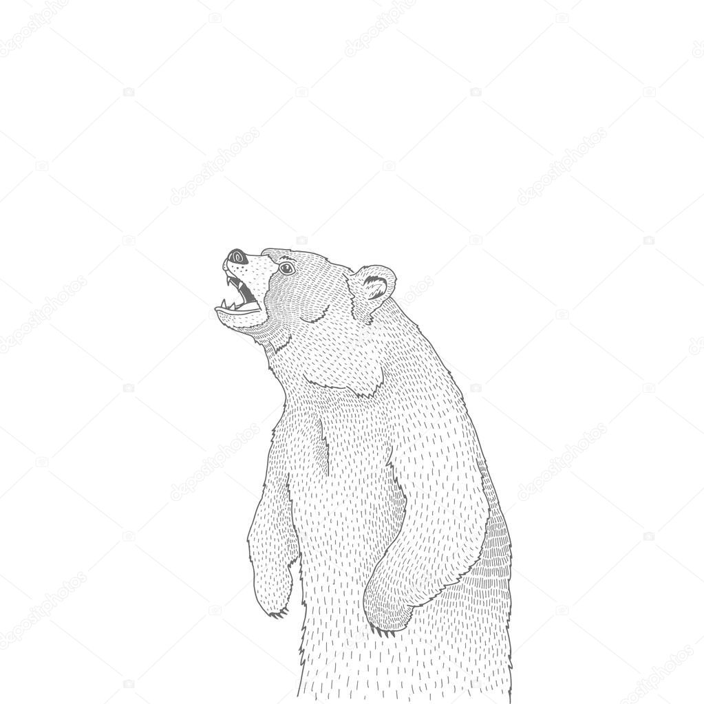 Vector decorative illustration of roaring brown bear forest animal