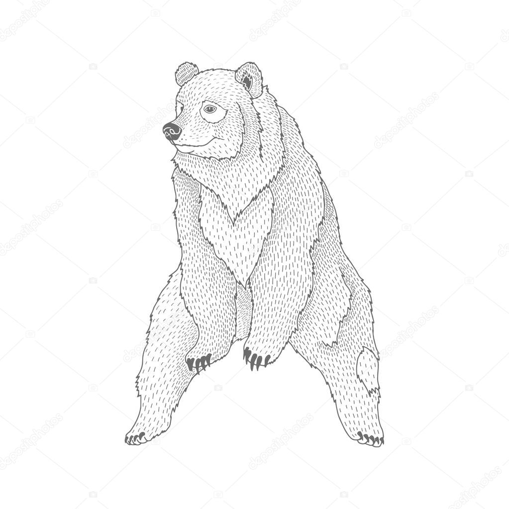 Vector decorative illustration of sitting happy brown bear forest animal