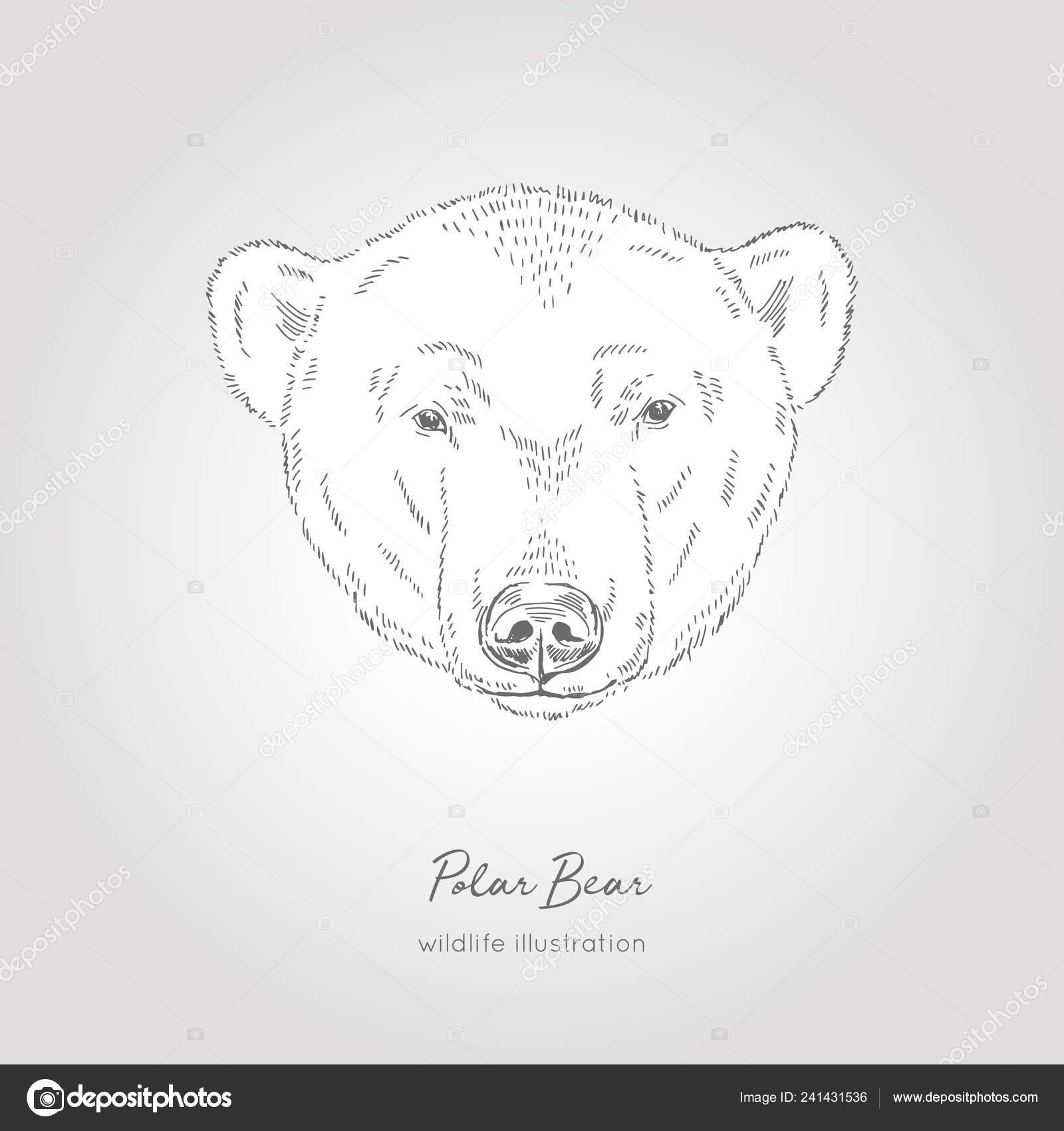 Hand Drawn Sketch Head Of Polar Bear Vector Illustration