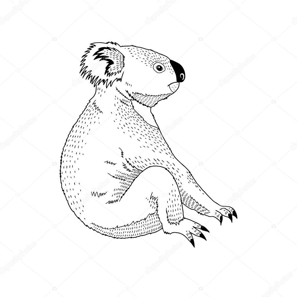 Vector decorative illustration of sitting koala animal