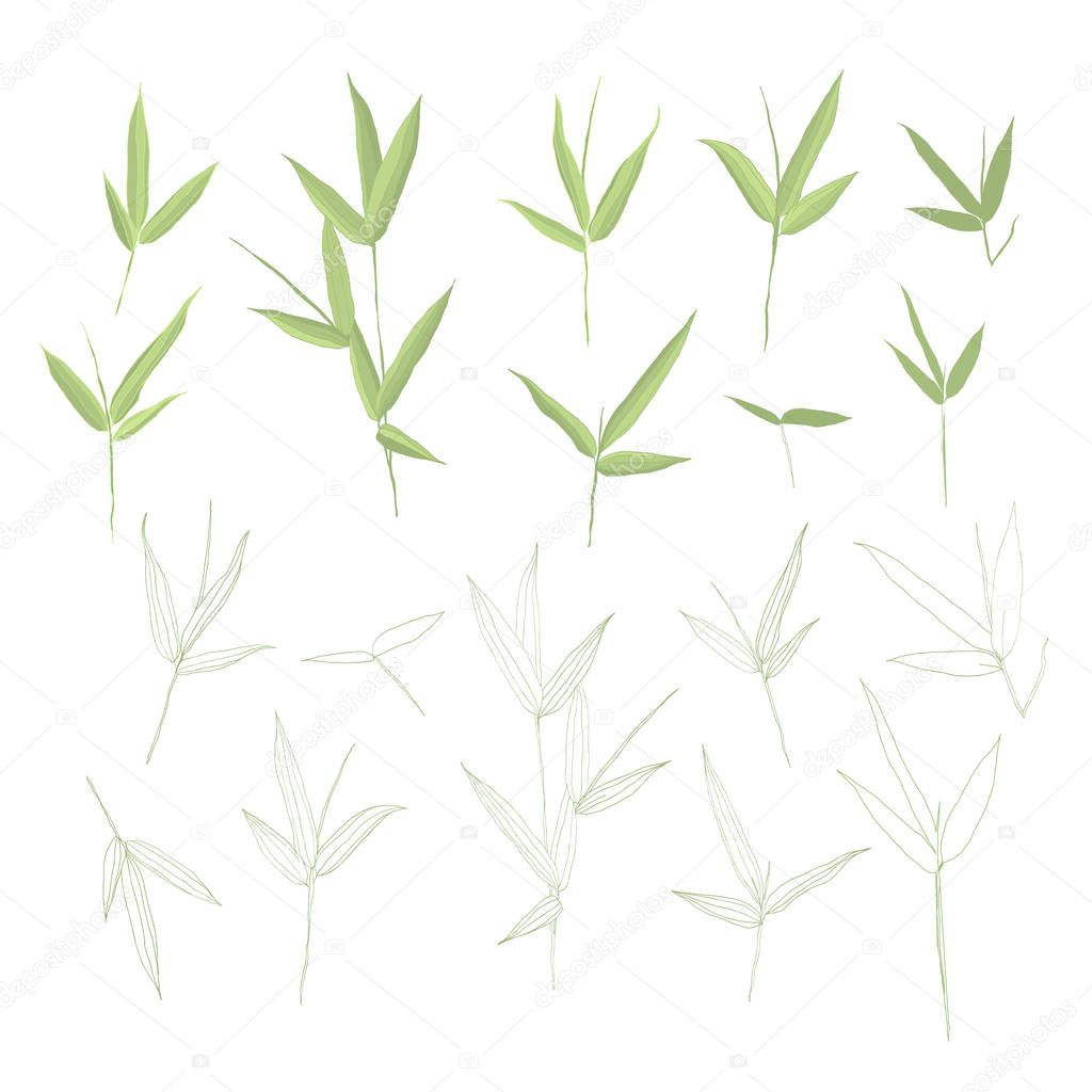 Beautiful hand drawn botanical vector illustration with bamboo leaves. Isolated on white background.