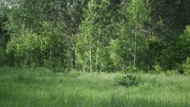 Mann im Zebra-Kostüm, mit aufgemaltem Gesicht, heller Emotion, springt im Wald,