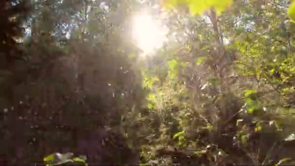 Walking through the woods. Sun shining. Ecological, nature protection concept. Earth day