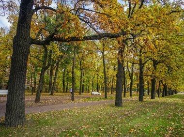 Autumn park in Saint Petersburg, Russia