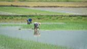 Fotografie Landschaft der Reisfelder in Nordvietnam