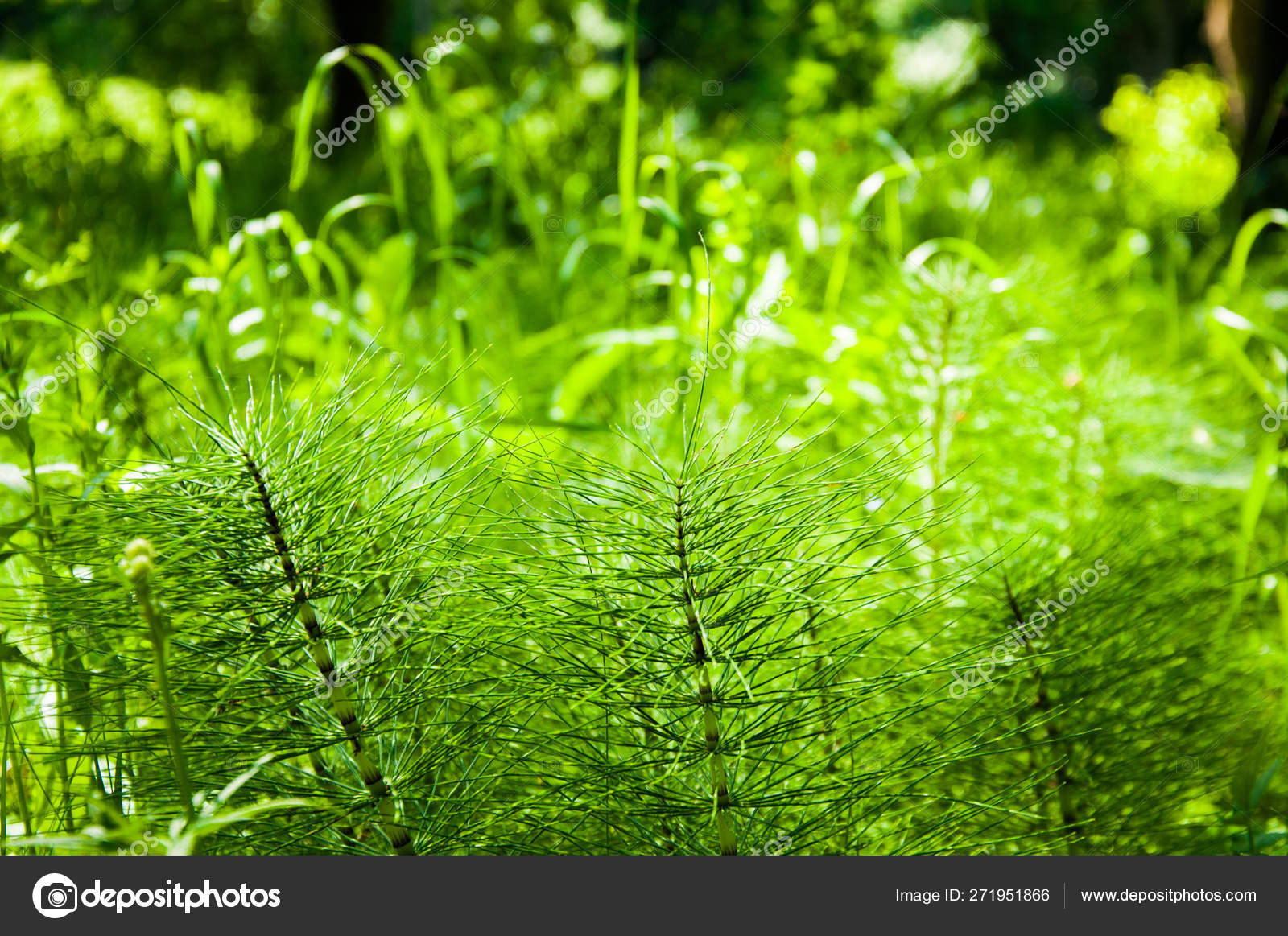 Bright Green Grass Other Plants Forest Summer Stock Photo Image By C Amdre100 271951866