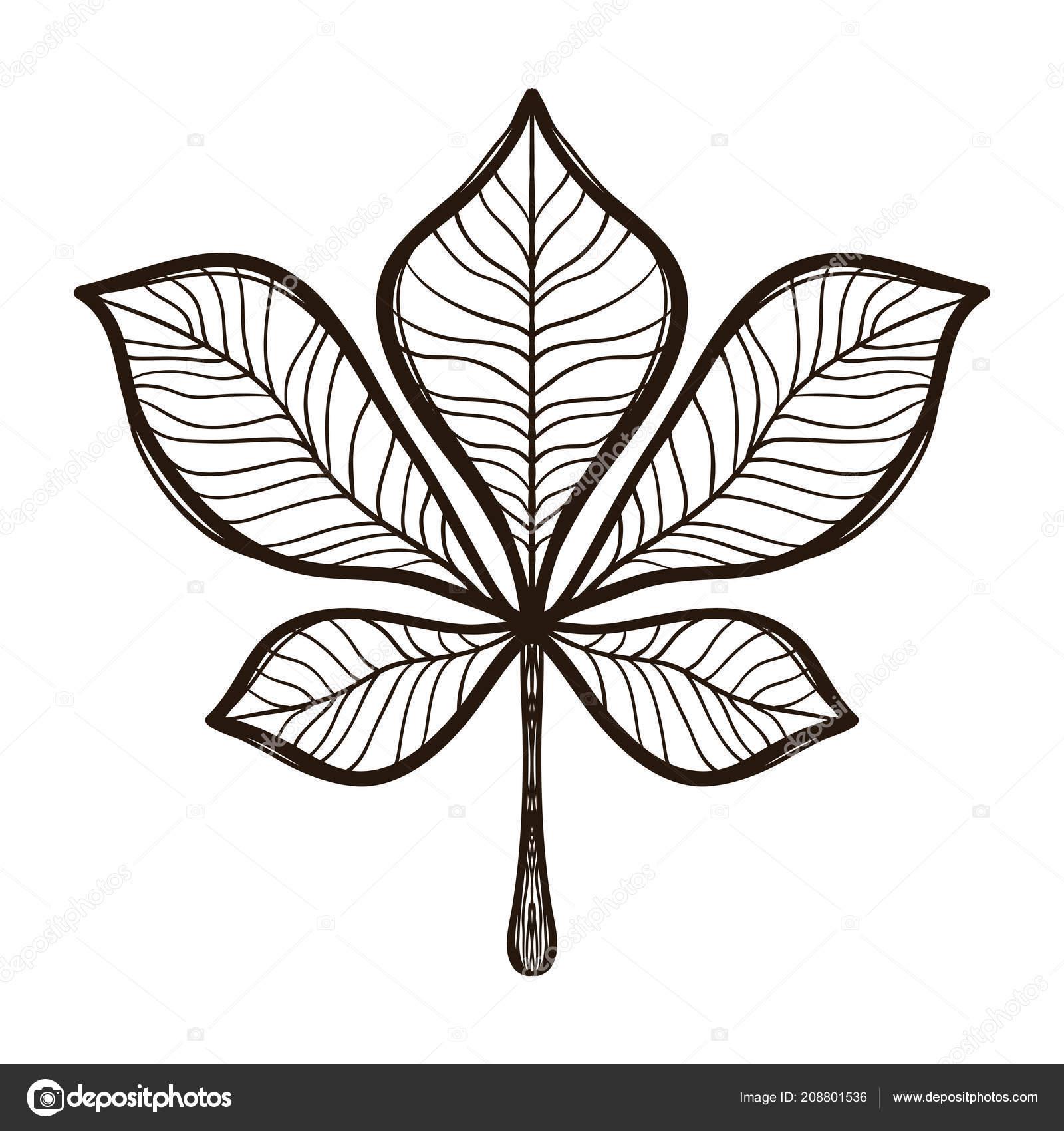 Sonbahar Kestane Ağacı Yaprağı Yetişkin Boyama Stok Vektör