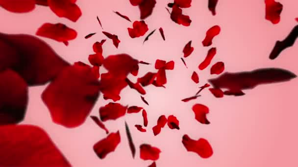 petali di rosa cadono in forma di cuore