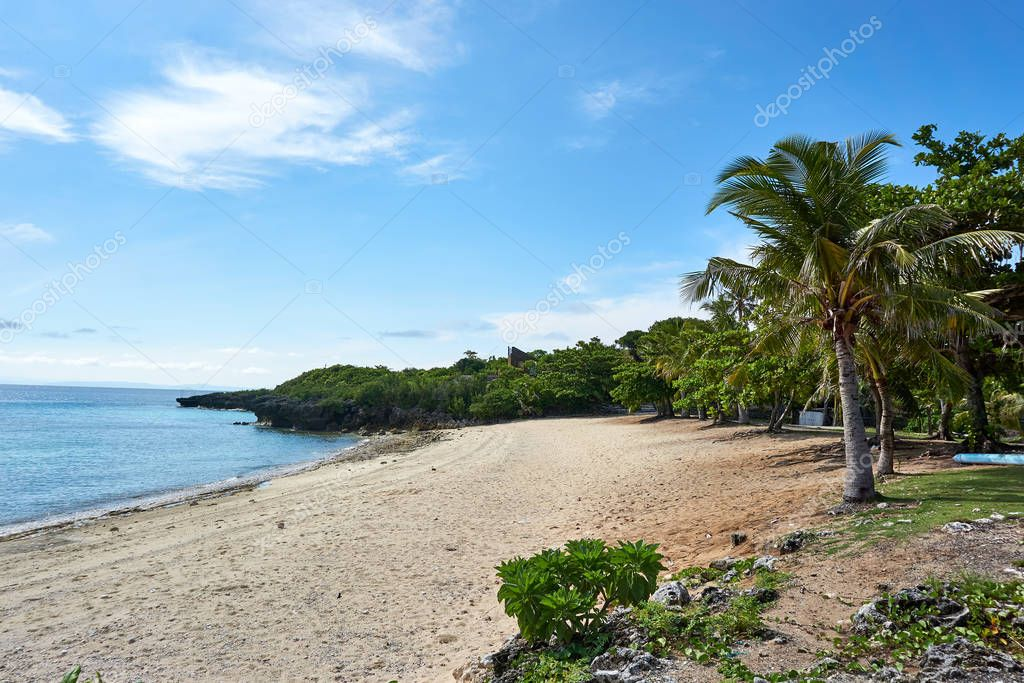 Beach and coconot tree at island Malapascua. Philippines