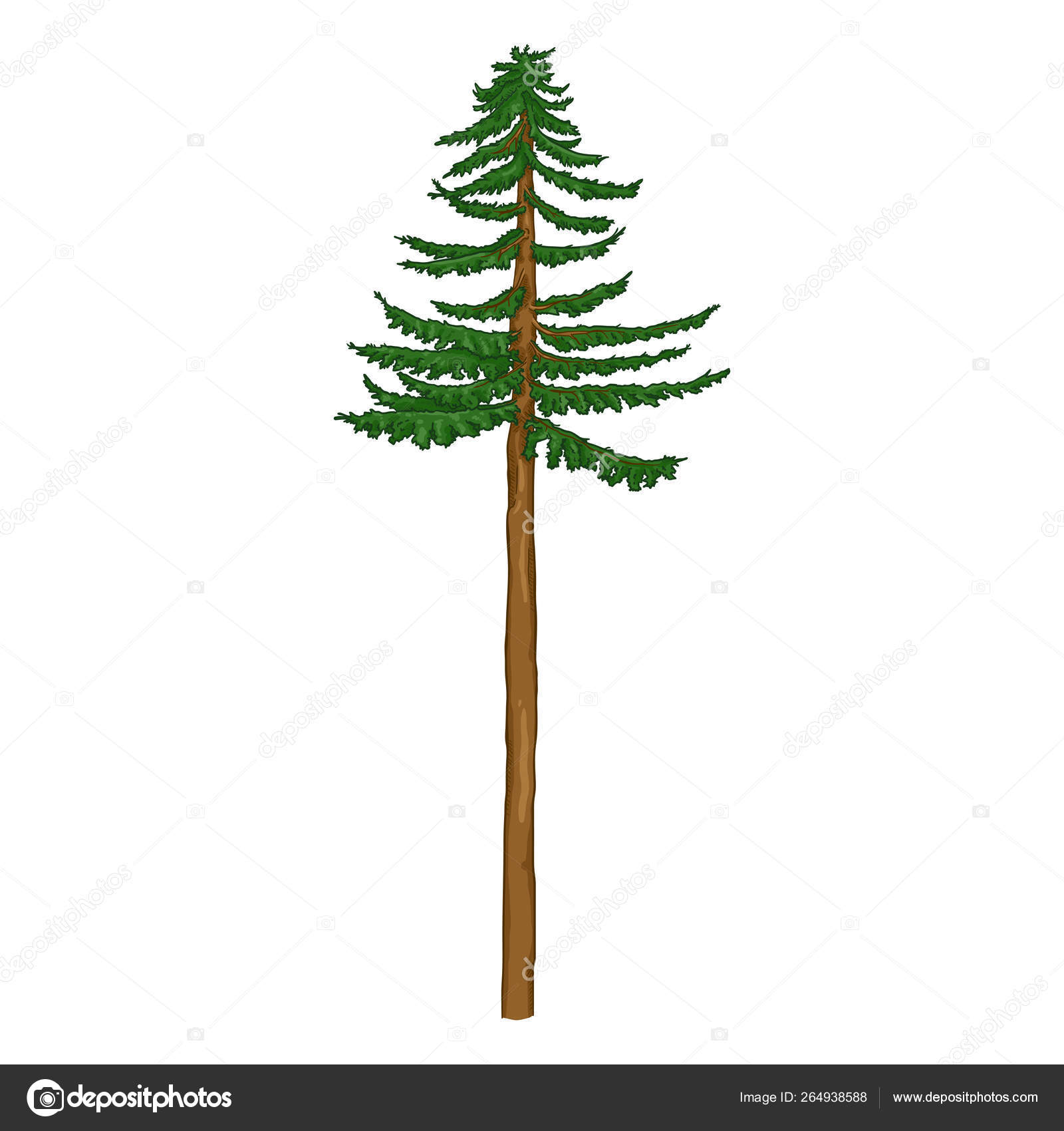 Vector Cartoon Pine Tree With Long Trunk Stock Vector C Nikiteev 264938588 Free vector cartoon trees to create stickers, decals, public signs, company logos. vector cartoon pine tree with long trunk stock vector c nikiteev 264938588