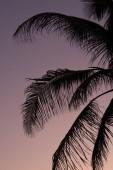 pálmafa sziluett és naplemente ég