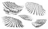 Fotografia Insieme di colline con i vigneti disegnato a mano. Frammento di scena rurale monocromatico. Abbozzo di vettore