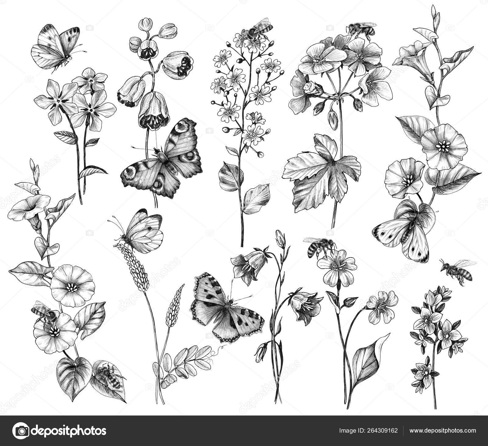 Hand Drawn Wild Flowers And Insects Stock Photo Image By C Valiva 264309162