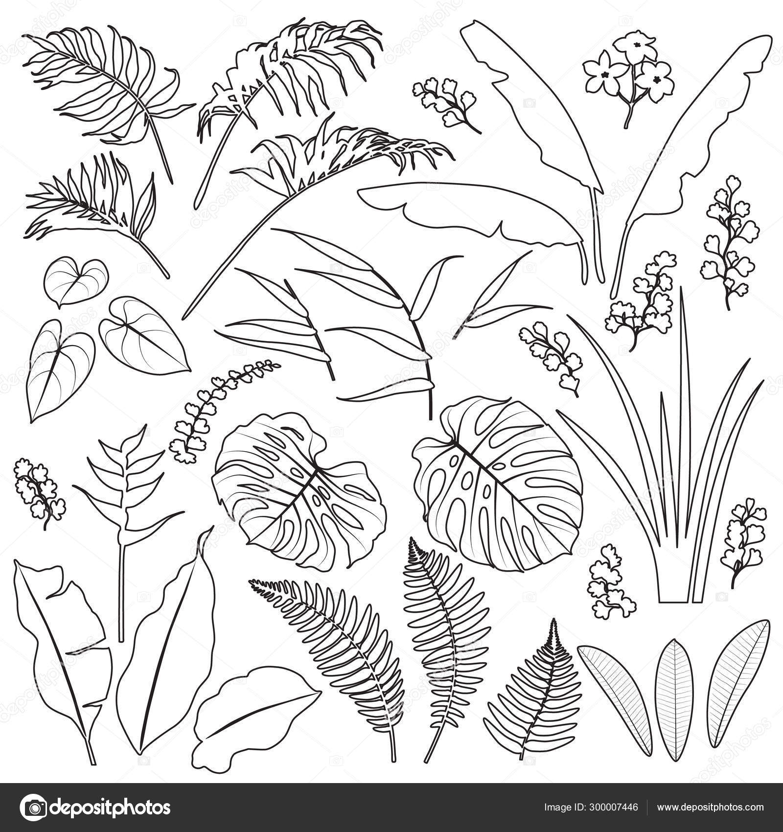 Tropical Leaves and Flowers Outline Set \u2014 Stock Vector