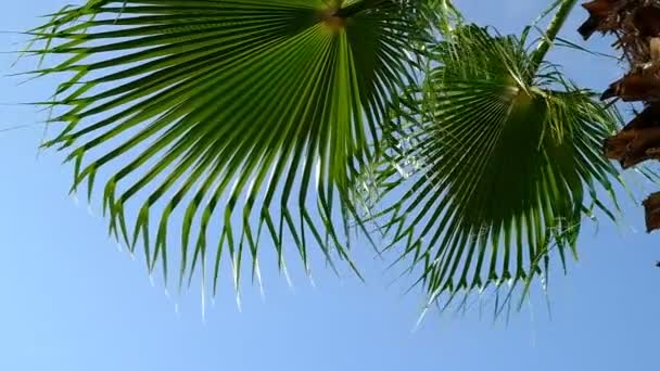 Branches of a palm tree against the blue sky. Green leaves sway in the wind. Summer. Day. Georgia.