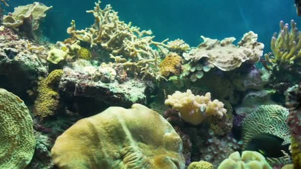 Amazing Colorful Coral Reef Wild Life