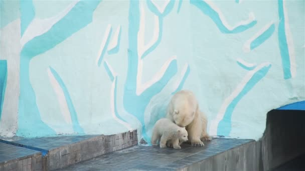 White Polar Bear Cub Playing with She-bear