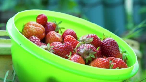 Výběr čerstvých jahod do zelené mísy