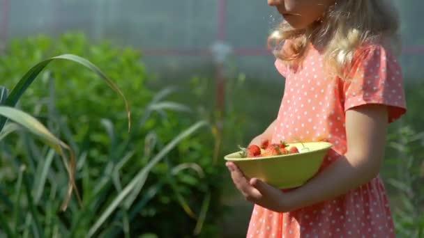 Mladá dívka sběrem jahod na plantáži
