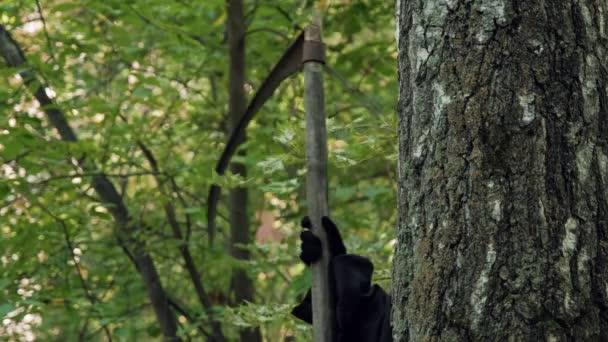 Kaszás a kaszás kukucskál a fáról