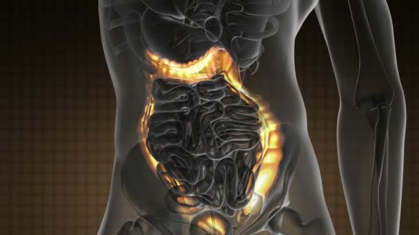 scansione anatomica del colon umano