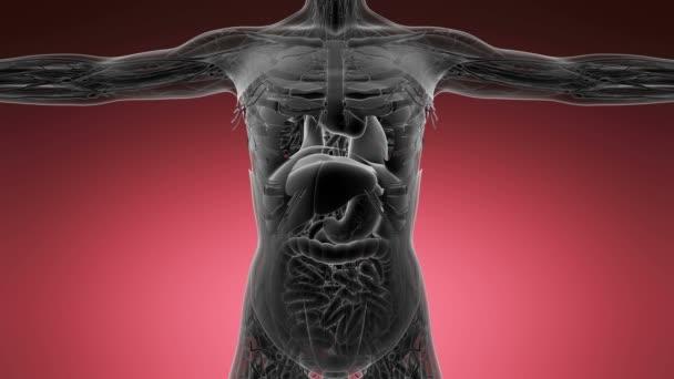 Anatomie tomografie prohledání lidského těla
