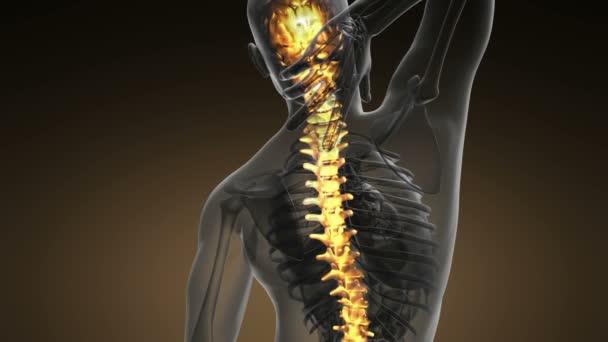 Bolesti zad v zadní kosti