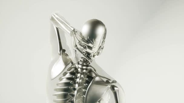 modello di scheletro umano con gli organi