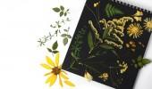 Herbarum s divokými květinami, větvemi, listy. Botanik na černém a bílém pozadí,
