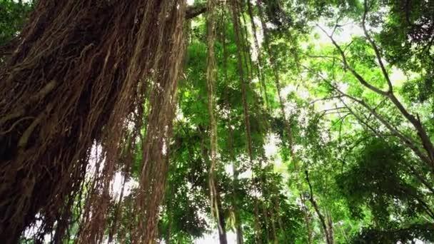 Paving slabs overgrown with moss. Walk through rainforest path