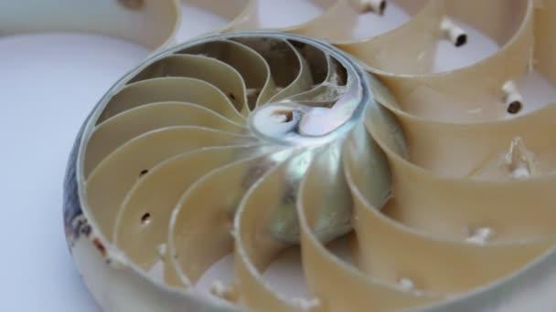 nautilus shell stock Fibonacci footage video clip drehen golden ratio anzahl sequenz natürlicher hintergrund halb schnitt schnitt