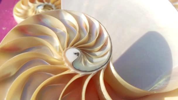 nautilus shell Symmetrie Fibonacci Goldener Schnitt Sequenznummer Stock Footage Video