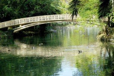 Bridge on the lake of Infante Don Pedro park in Aveiro, Portugal. Europe