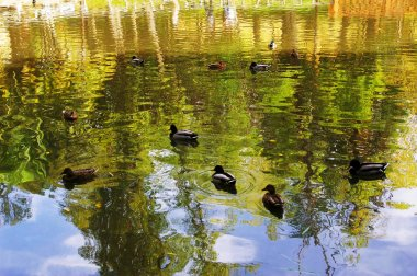 ducks in the Infante Don Pedro Park in Aveiro, Portugal. Europe