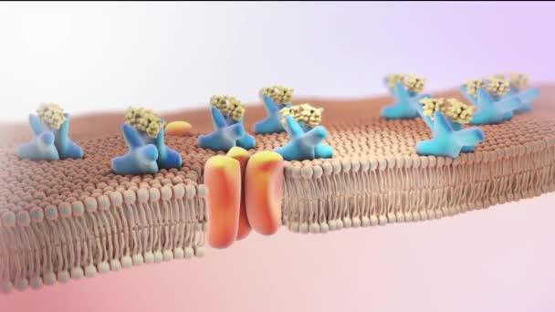 Struktura inzulínu. 3D mikrobiologie