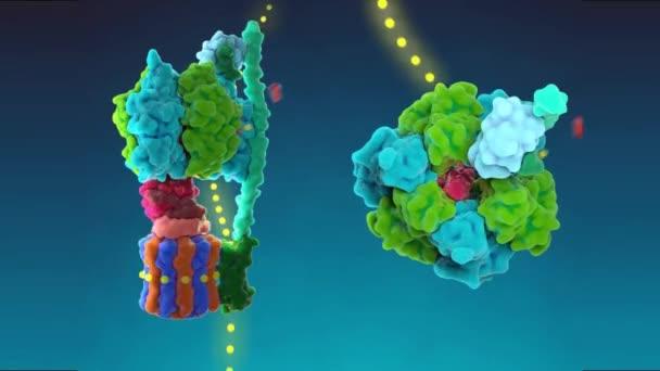 A gének átalakítása funkcionális fehérje struktúrákká DNS szekvenciákkal