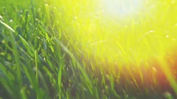 Čerstvé zelené trávy přírodní pozadí textury, trávník pro pozadí. Svit slunce