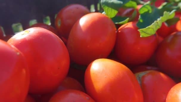 frische reife Tomaten in einer Schachtel im Lebensmittelladen. Gesunde Ernährung.
