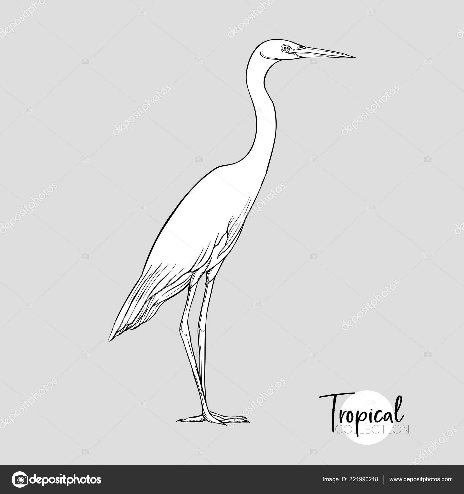 White Heron Tropical Bird Graphic Drawing Engraving Style
