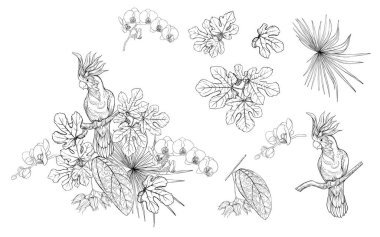 Set of elements for design with tropical plants, palm leaves, monsters, orchids and birds. Graphic drawing, engraving style. vector illustration