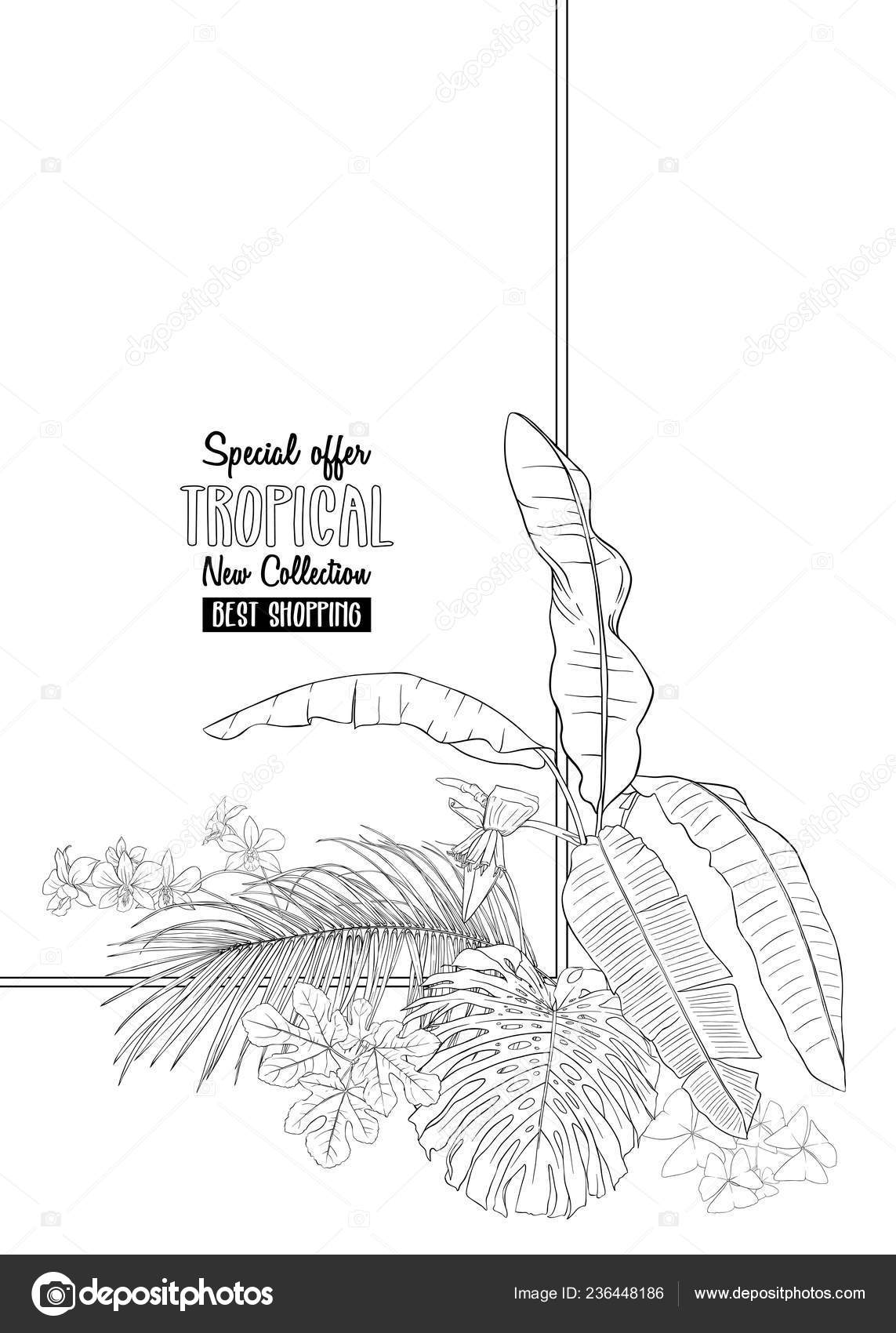 Template Greeting Card Invitation Banner Tropical Plants Palm Leaves Monstra Stock Vector C Elenabesedina 236448186 Here you can explore hq tropical leaves transparent illustrations, icons and clipart with filter setting like size, type, color etc. depositphotos