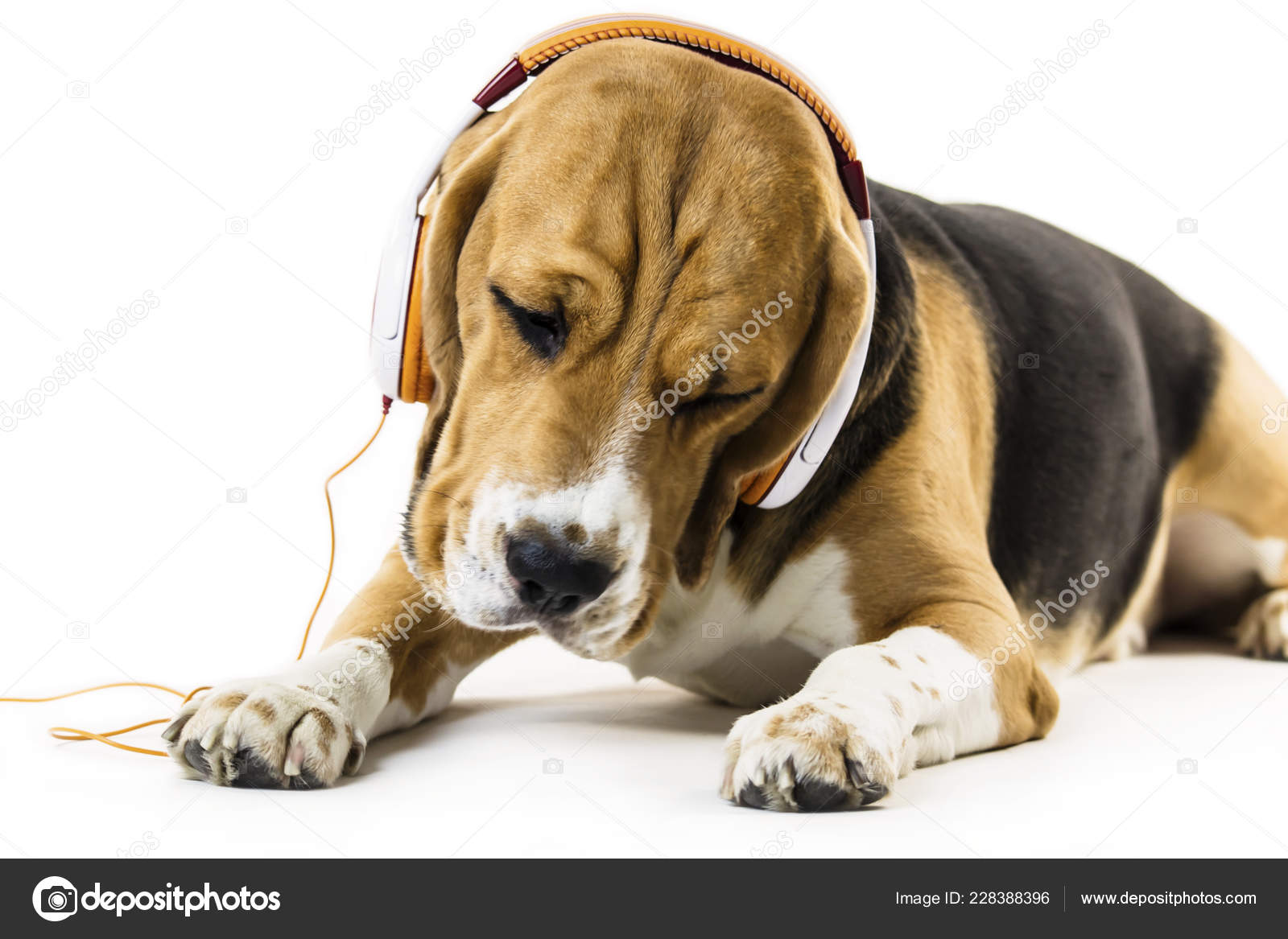 Funny Beagle Dog Headphones Listening Music White Background — Stock