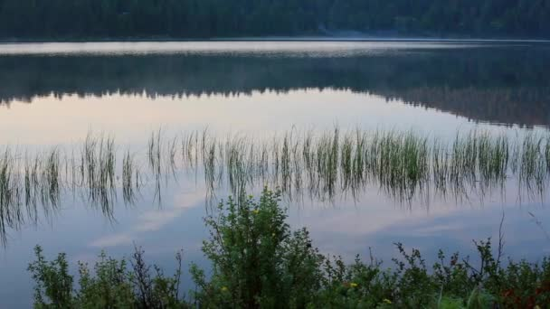 Cinemagraph. Summer nature mountain forest lake landscape, time-lapse.