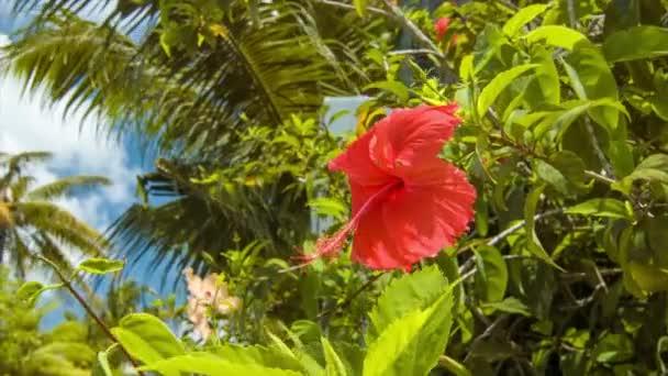 Trópusi vörös Hibiszkusz virág Zöld növényekkel és pálmafákkal napján a napfény Bora Bora Francia Polinézia a Dél-csendes-óceáni