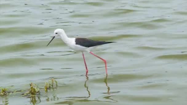 footage of bird in pond in Natural Environment of Kruger National Park in South Africa